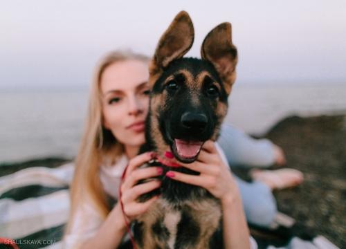 фотосессия с собакой Харьков фото